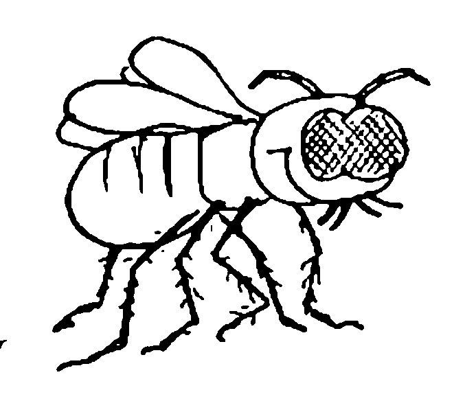 Insekten | Wuschels Malvorlagen