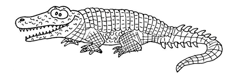 Krokodile | Wuschels Malvorlagen