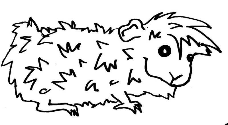Meerschwein Wuschels Malvorlagen